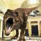 The main feature of the Branson, Missouri Dinosaur Museum is that it contains 50 full bodied life size dinosaurs.