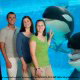 Killer whales mock guests with outstretched tongues at Seaworld in Orlando, Florida.
