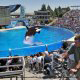 Shamu stadium dazzles spectators on their summer vacation to Seaworld in Orlando, Florida.