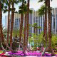 Beautiful Landscaping with Palms at the Tropicana Hotel and Casino in Las Vegas, NV. Take a relaxing walk and enjoy the nature while on your Spring Break Vacation to Las Vegas.